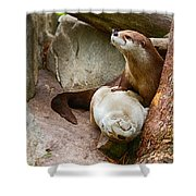 Doctor Otter At The Western North Carolina Nature Center Shower Curtain