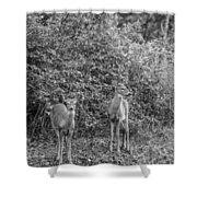 Doe A Deer Bw Shower Curtain