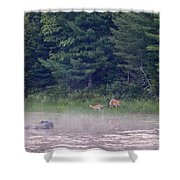 Doe And Fawn In The Early Morning Shower Curtain