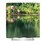 Doe And Fawns At The Pond Shower Curtain