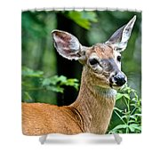 Doe Close Shower Curtain