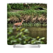 Doe Crossing The River Shower Curtain