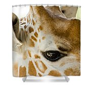 Doe Eyes Shower Curtain
