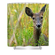 Doe In Morning Dew Shower Curtain