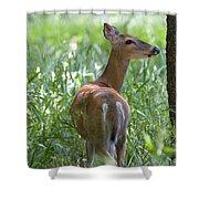 Doe Meadow Shower Curtain