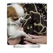 Dog And True Friendship 3 Shower Curtain