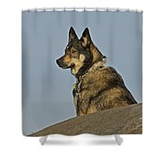 Dog At Point Bonita 2 Shower Curtain