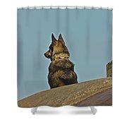 Dog At Point Bonita Shower Curtain