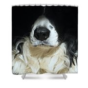 Dog Close Up Shower Curtain