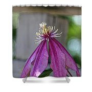 Dog Eared Clematis Shower Curtain