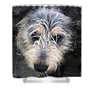 Dog Head Shower Curtain