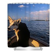 Dog In A Dingy At Put-in-bay Harbor Shower Curtain