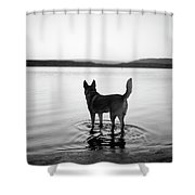 Dog Looking Over Abiquiu Reservior Shower Curtain