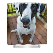 Dog On A Wooden Deck Shower Curtain
