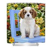 Dog On Blue Chair Shower Curtain by Greg Cuddiford