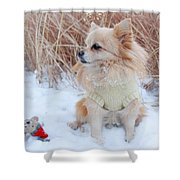Dog Playing In Snow Shower Curtain
