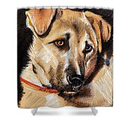 Dog Portrait Drawing Shower Curtain