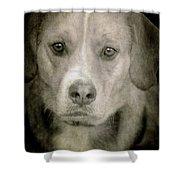 Dog Posing Shower Curtain