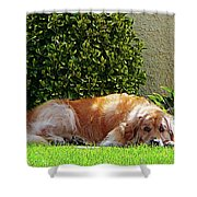 Dog Relaxing Shower Curtain