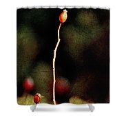 Dog Rose Shower Curtain