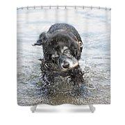 Dog Shake Shower Curtain