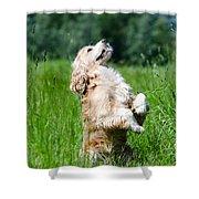 Dog Sitting Up Shower Curtain