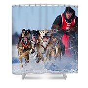 Dog Sledding Race Shower Curtain