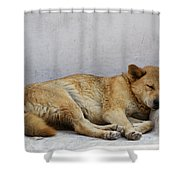 Dog Sleeping Shower Curtain
