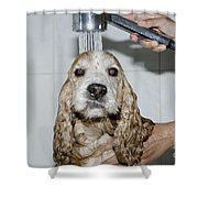 Dog Taking A Shower Shower Curtain by Mats Silvan