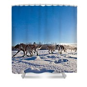 Dog Team Pulling Sled Shower Curtain