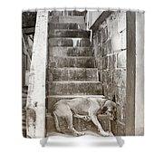Dog Tired Shower Curtain