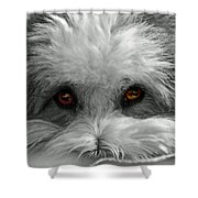 Coton Eyes Shower Curtain