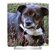 Dogg Shower Curtain
