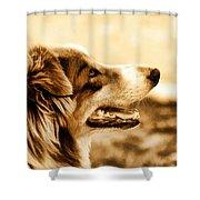 Doggie Face Shower Curtain