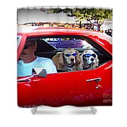 Doggies In The Window Shower Curtain