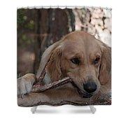 Doggy Heaven Shower Curtain