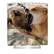 Dogs Fight On The Beach In Emerald Shower Curtain