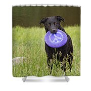 Dogs For Peace Too Shower Curtain