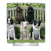 Dogs Sitting On Bench Shower Curtain