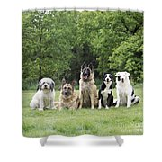 Dogs, Various Breeds In A Line Shower Curtain