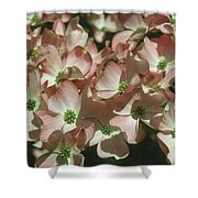 Dogwood 1 Shower Curtain