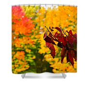 Dogwood And Fall Colors Shower Curtain