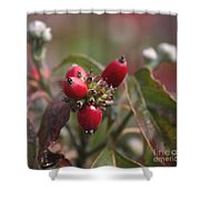 Dogwood  Berries Shower Curtain