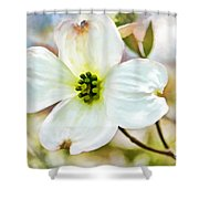 Dogwood Blossom - Digital Paint I  Shower Curtain