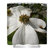 Dogwood Blossom Shower Curtain