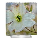 Dogwood Blossom Shower Curtain