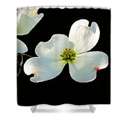 Dogwood Blossoms Painted For Jerry Shower Curtain