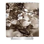 Dogwood Blossoms Shower Curtain by Sharon Popek