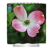 Dogwood Blosssom Shower Curtain