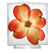 Dogwood Flower Shower Curtain